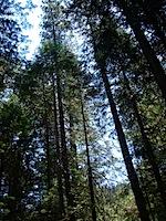 Camping at Big Trees