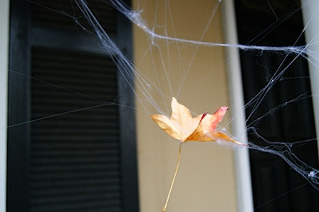 the tangled web we weave