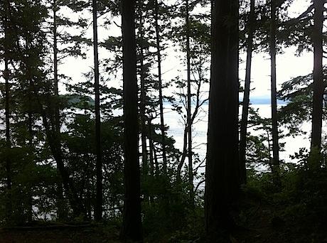 Maze of trees