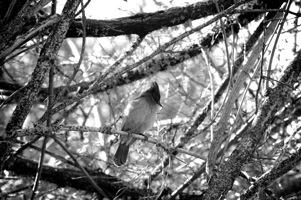 Juls' Bird.jpg