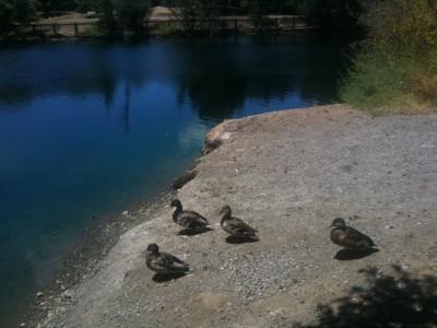 Duck.-Duck.-Goose-400x300.jpg