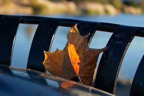 fallin' leaf