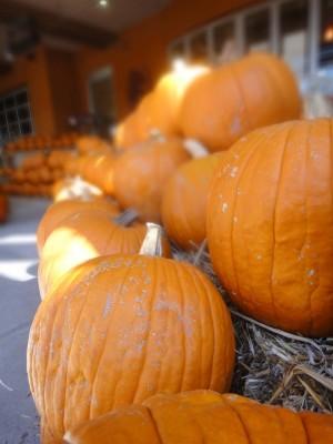 pumpkins-300x400.jpg