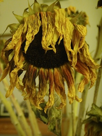 Sundried flower