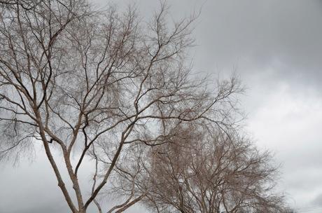 bare trees.jpg