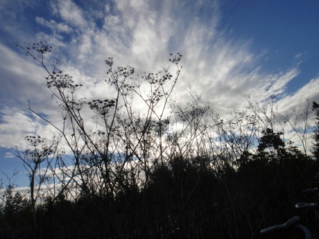 weeds and clouds.jpg