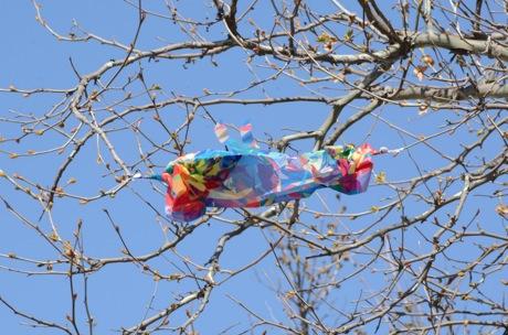 Lost Kite.jpg