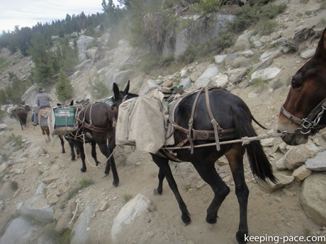 Mule Train bringing supplies to the Ranger Station at Rae Lakes